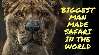 Largest Man Made Safari in the WORLD at Al Ain Zoo