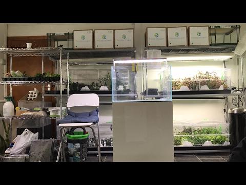 LIVE Dutch Style aquascape workshop at Aquarium Gardens using Aquascaper 600 aquarium