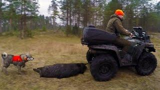 Охота #62 загонная на лося