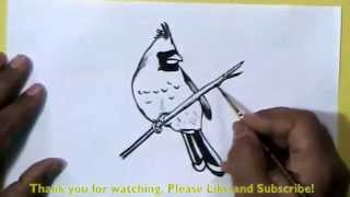 How to Draw a Beautiful bird with paint brush and ink