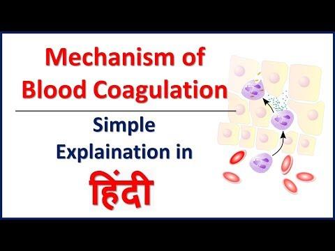 Hemostasis/Blood coagulation mechanism simple explaination in Hindi | Bhushan Science
