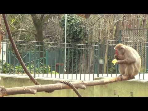Rome Zoo [HD]