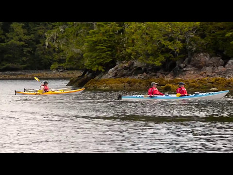 Majestic Ocean Kayaking Ucluelet Tofino BC Canada