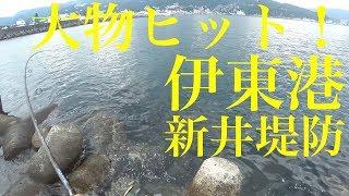 伊東港新井堤防ジギングで大物ヒット!!