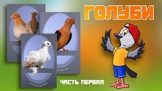 Голуби из питомника Юрия Неёлова (часть первая)