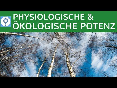 physiologische und kologische potenz einfach erklrt wettbewerbs verdrngungsprozesse bume - Okologische Nische Beispiel