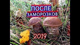 ГРИБЫ ПОСЛЕ ПЕРВЫХ ЗАМОРОЗКОВПОДМОСКОВЬЕ2019