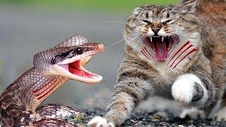 Zwierzęta Polujące Na Węże