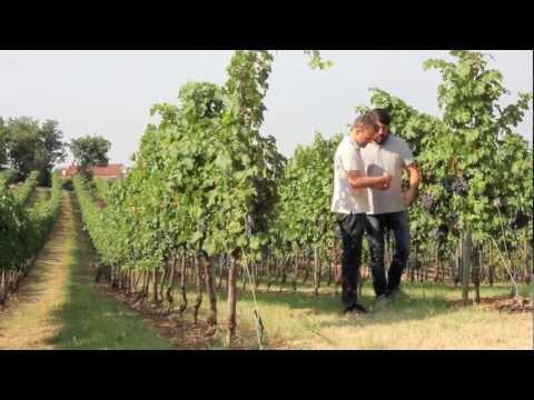 Cavazza wine