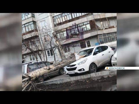 В Красноярске сильный ветер снес крышу здания и повалил дерево на автомобиль
