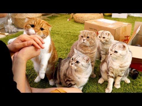 고양이들에게 간식주다가 물리다! ㅠㅠ
