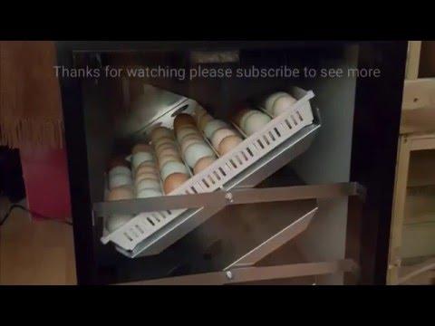 rcom king suro 20 incubator instructions