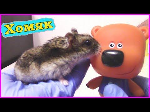 Хомяк обломался / gopher broke (tim miller) [2006, мультфильм.