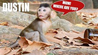 DUSTIN SCARE MISSING MUM, SHE WHISTLE CALL MUM BACK   #MONKEY#