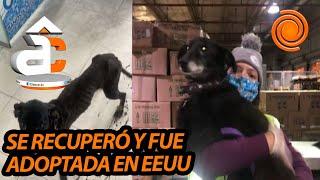 Una perrita, que fue recuperada y adoptada, recorrió más de 10.000 km para encontrarse con su dueña