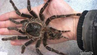 Самые большие животные и насекомые на планете.