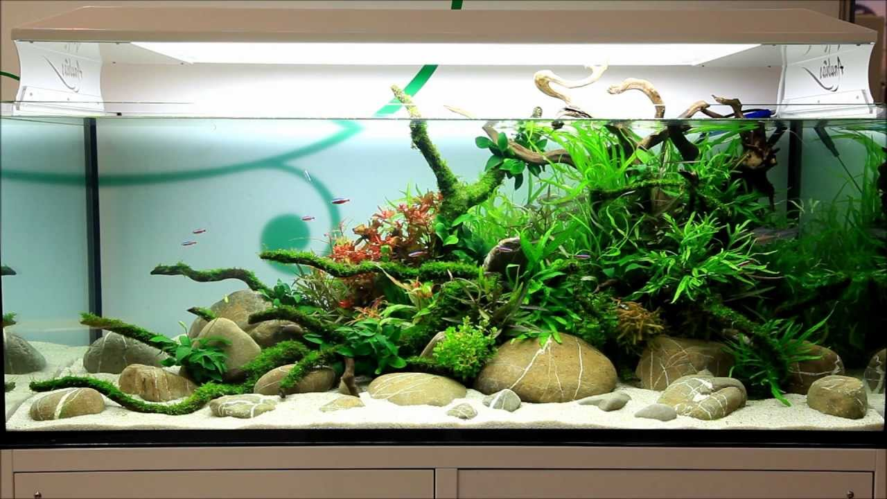 Just Aquascaping Anubias At Interzoo 2012 Youtube