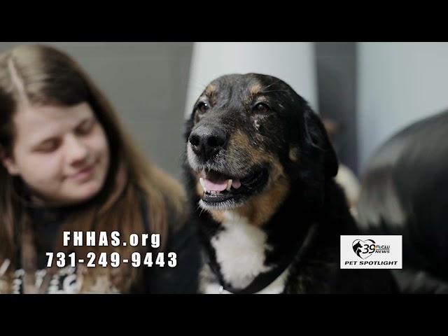 Pet Spotlight: Meet Buddy