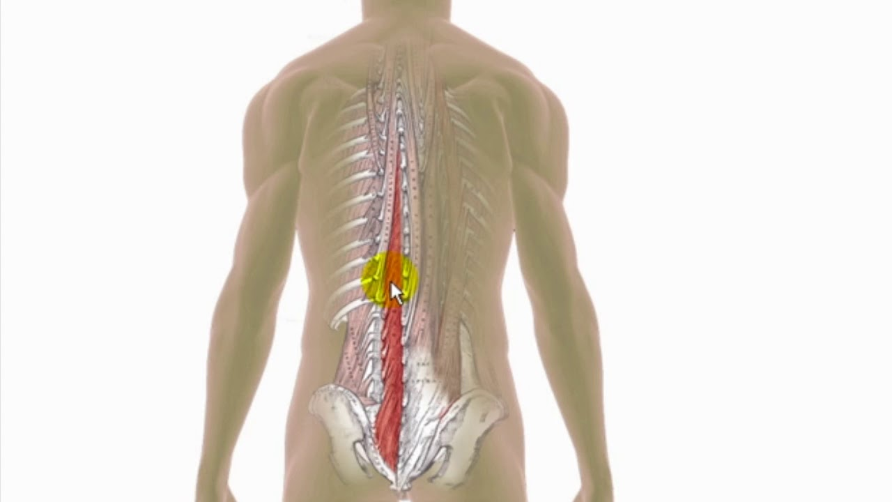 Trigger Points Explained - Multifidus - YouTube
