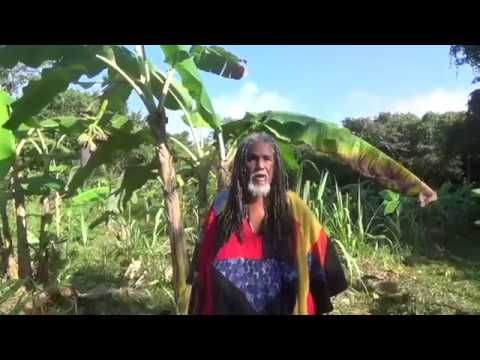 Belize Vegan Roots Holistic Living Approach to Youth Development