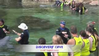 Discovery Cove Dolphin Experience