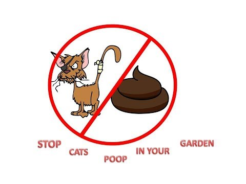 HOW TO STOP CATS POOPING IN YOUR GARDEN