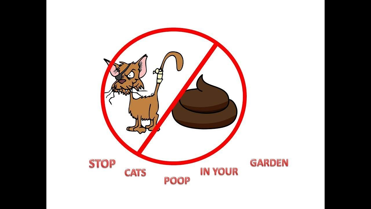 3 Ways To Prevent Cats From Pooping In The Garden Wikihow