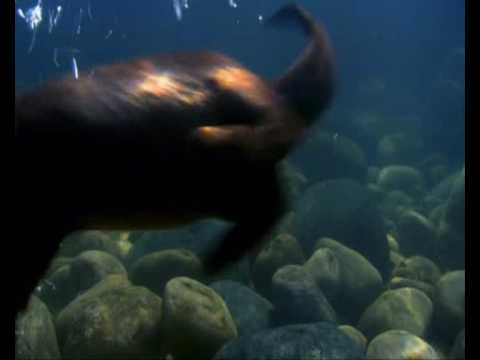 BBC Planet Earth - Otters