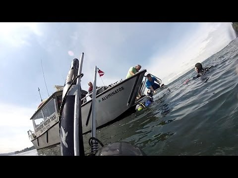 Scuba diving at Blake Island