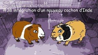 int�gration d'un nouveau cochon d'Inde