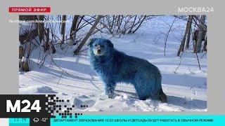 Голубые собаки замечены в Дзержинске Москва 24