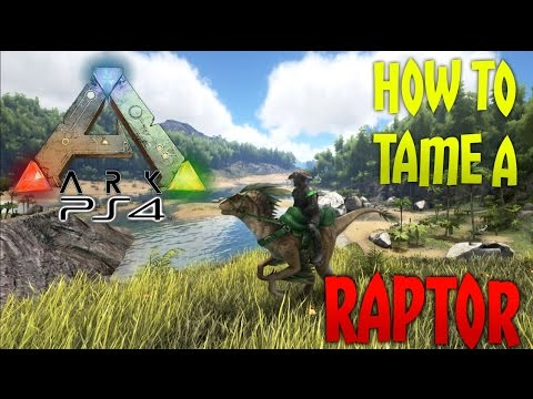 ARK: Survival Evolved [PS4] - How To Tame A Raptor! [Easy Guide]