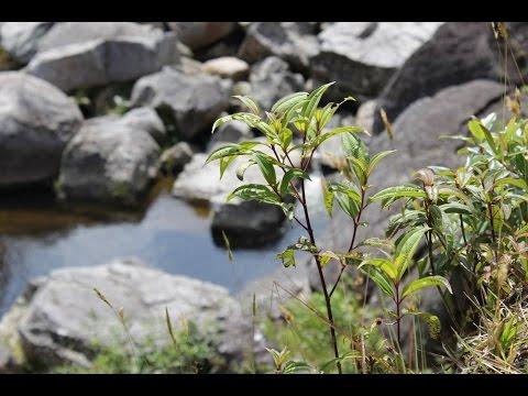 Recorrido por reserva forestal Sur Oriente Antioqueño -Colombia- TvAgro por Juan Gonzalo Angel