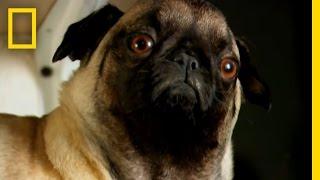 Stuffing Dead Pets   Taboo: Pets