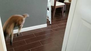 Cats are weird - cute cat chirp at the end
