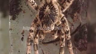 Большой паук стал объектом для дискуссии в социальных сетях