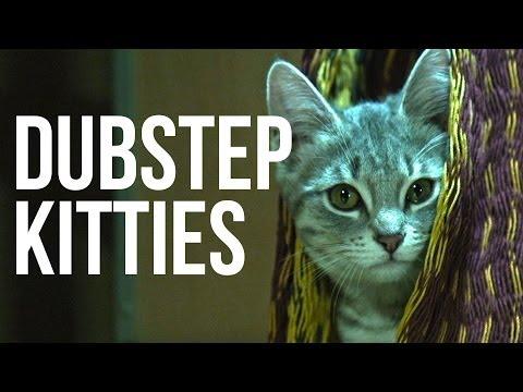 Kittens Droppin' Beats