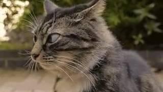 Кот прикол