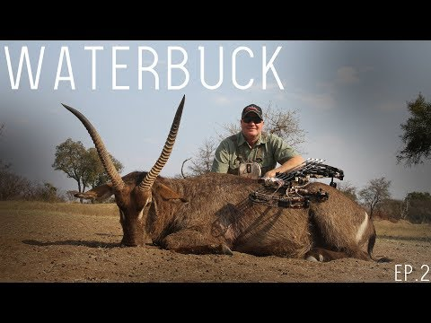 South Africa 4K Hunting 2018 EP.2: Experienced Bow Hunter Takes on Waterbuck Hunting! Kill Shots!