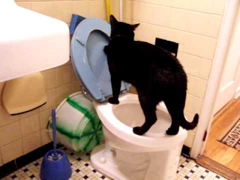 Smart cat pees and shits in the toilet and then drinks from the sink