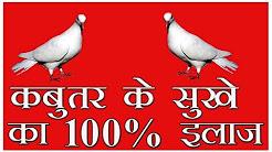 Illness in Pigeon and Doves (sokhe) ka desi ilaj by Aman prabhakar