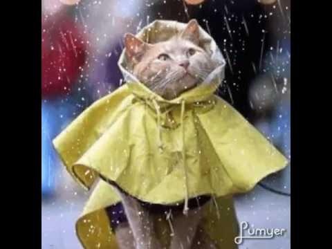 Anche con la pioggia..il mio BUONGIORNO 🌂 - YouTube