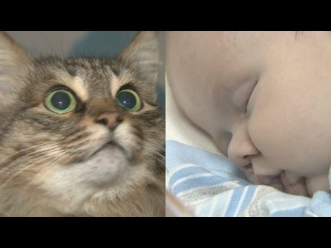 Thumbnail for Cat Video Homeless cat saves abandoned baby in Russia
