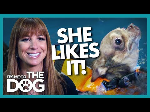 Emergency Hydrotherapy for 'Real Housewives' Star's Chihuahua | It's Me or the Dog