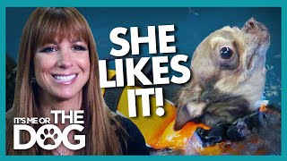 """Emergency Hydrotherapy for """"Real Housewives"""" Star's Chihuahua 