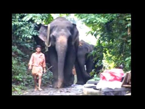 Jeune Route XIV - India 2007