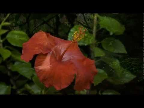 Mele Kalikimaka sung by Bing Crosby ~ The Hawaiian Christmas Song (HD)