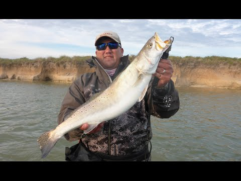 Big Trophy Trout Wade Fishing
