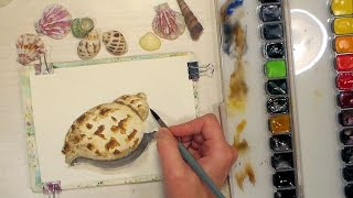 How to Paint a Simple Seashell // Beginner Watercolor Tutorial
