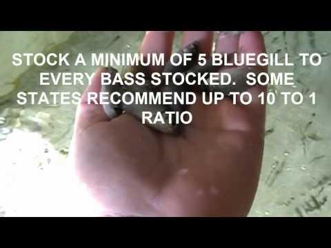 Dunn's Fish Farm in Fittstown, OK - (800) 433-2950 Recreation